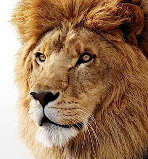 Safari005.jpg